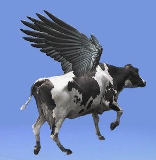 vaca-voadora